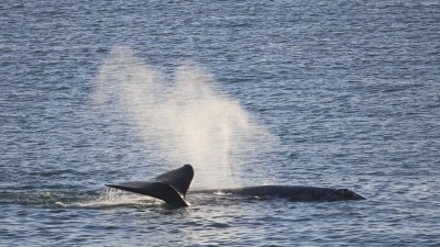 Whale Watch Art and Nature Hike